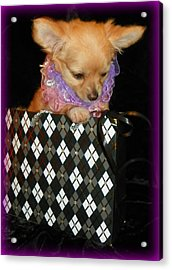 Small Package I Acrylic Print by Sheri McLeroy