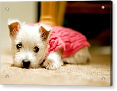 Small Puppy Sleeping On Mat Acrylic Print by James DiBianco Jr