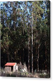 Small Shack Near The Town Of Bodega . 7d12422 Acrylic Print by Wingsdomain Art and Photography