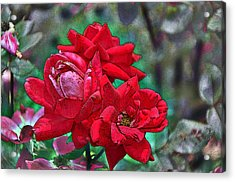 Smell The Roses Acrylic Print by Paul Mashburn