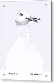 Smiling Seagull Acrylic Print by Fred Jinkins