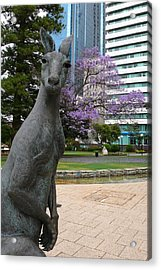 Smith Kangaroo Acrylic Print by Gregory Smith