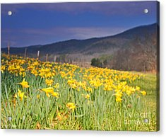 Smoky Mountain National Park Daffodil Spring Acrylic Print