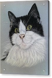 Smudge  A Pastel Portrait Acrylic Print by Hillary Rose
