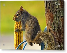 Snaggletooth Squirrel With Corn Acrylic Print by Bill Tiepelman