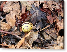 Snail In The Leaves Acrylic Print by Carolyn Postelwait
