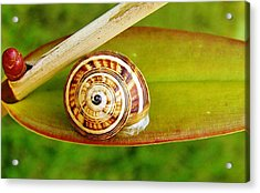 Acrylic Print featuring the photograph Snail On Leaf by Werner Lehmann