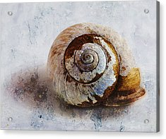 Snail Shell Acrylic Print by Ron Jones