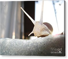 Acrylic Print featuring the photograph Snails 1 by AmaS Art