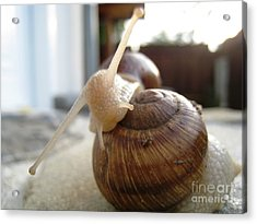 Acrylic Print featuring the photograph Snails 10 by AmaS Art