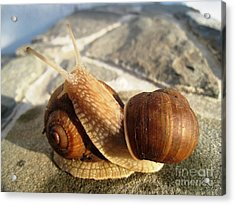 Acrylic Print featuring the photograph Snails 11 by AmaS Art