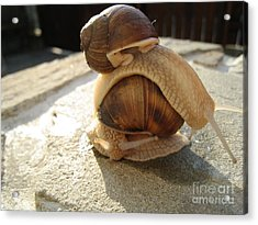 Acrylic Print featuring the photograph Snails 14 by AmaS Art