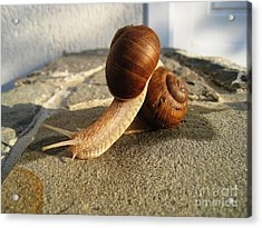 Acrylic Print featuring the photograph Snails 18 by AmaS Art