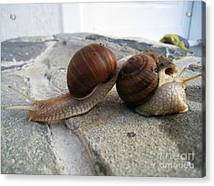 Acrylic Print featuring the photograph Snails 19 by AmaS Art
