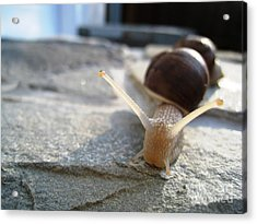 Acrylic Print featuring the photograph Snails 20 by AmaS Art