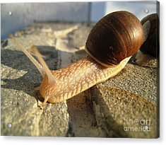 Acrylic Print featuring the photograph Snails 21 by AmaS Art