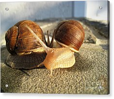 Acrylic Print featuring the photograph Snails 22 by AmaS Art