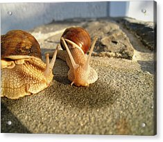 Acrylic Print featuring the photograph Snails 24 by AmaS Art
