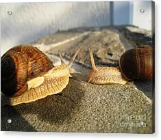 Acrylic Print featuring the photograph Snails 3 by AmaS Art