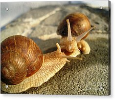 Acrylic Print featuring the photograph Snails 4 by AmaS Art
