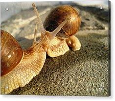 Acrylic Print featuring the photograph Snails 6 by AmaS Art