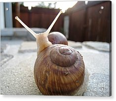 Acrylic Print featuring the photograph Snails 7 by AmaS Art