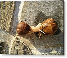 Acrylic Print featuring the photograph Snails 8 by AmaS Art