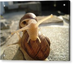 Acrylic Print featuring the photograph Snails 9 by AmaS Art