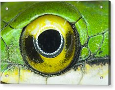 Acrylic Print featuring the photograph Snake Eye by John Burns