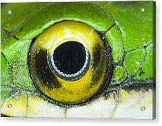 Snake Eye Acrylic Print