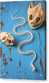 Snake Skeleton And Animal Skulls Acrylic Print by Garry Gay