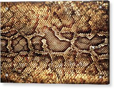 Snake Skin Acrylic Print by Abner Merchan