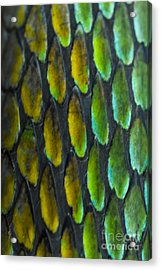 Acrylic Print featuring the photograph Snake Skin by John Burns