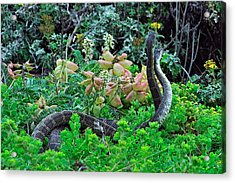 Snakes In The Grass Acrylic Print by Richard Leon