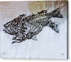 Snapper Acrylic Print by William Fields