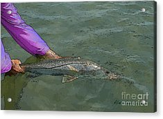 Snook Revival Acrylic Print by Alex Suescun