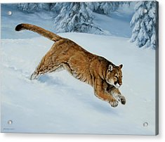 Snow Bound Acrylic Print