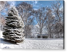 Snow Covered Pine Acrylic Print by Richard Gregurich