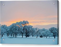Snow Covered Trees At Sunset Acrylic Print by Nancy Newell