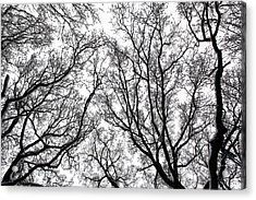 Snow Covered Trees Acrylic Print by Richard Newstead