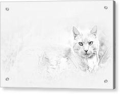Snow Eyes Acrylic Print