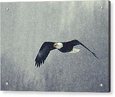 Acrylic Print featuring the photograph Snow Flight by Myrna Bradshaw