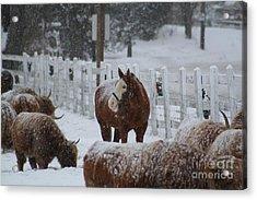 Snow Horse Acrylic Print by Linda Jackson
