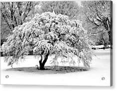 Snow In Connecticut Acrylic Print