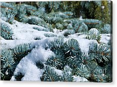 Snow In The Pines Acrylic Print