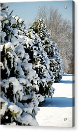 Snow In The Trees Acrylic Print