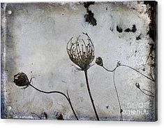 Snow Seeds Acrylic Print by Paul Grand