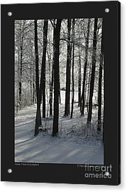 Snow Trees And Sunlight-ii Acrylic Print