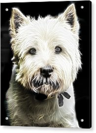 Snowball Acrylic Print by Tilly Williams