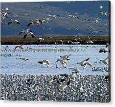 Snowing On Lower Klamath Lake Acrylic Print